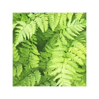 Frondes vertes luxuriantes de fougère toile