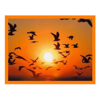 Frontière d'orange de scène de coucher du soleil carte postale