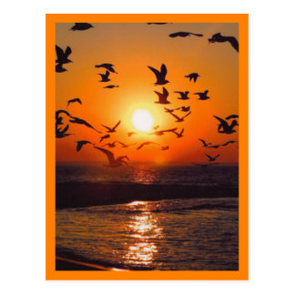 Frontière d'orange de scène de coucher du soleil cartes postales