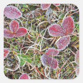 Frost a couvert le feuille, Canada Sticker Carré