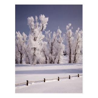 Frost a couvert les arbres et la barrière, le Colo Cartes Postales