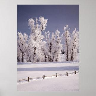 Frost a couvert les arbres et la barrière, le Colo Posters