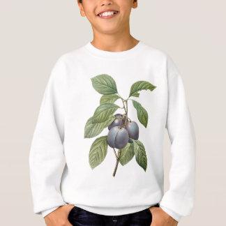 Fruit vintage de nourriture, prunes pourpres de sweatshirt