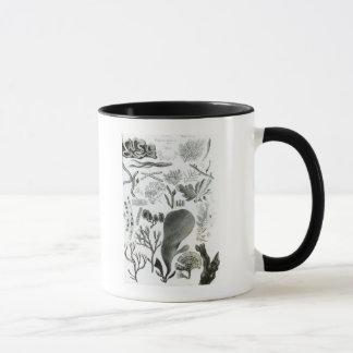 Fucus de Conferra Mug