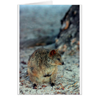 Fureur mignonne Quokka sur l'île de Rottnest Carte De Vœux