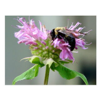 Gaffez l'abeille sur la carte postale 2 de fleur