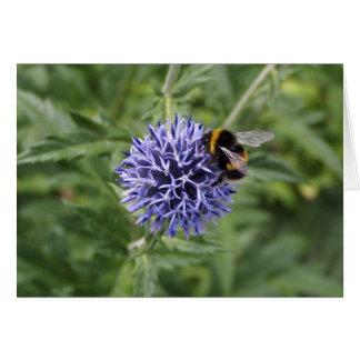 Gaffez l'abeille sur le chardon cartes