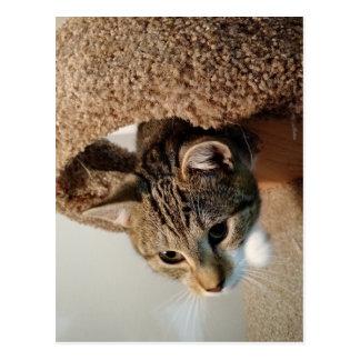Garde forestière le chat cartes postales