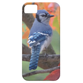 Geai bleu coque Case-Mate iPhone 5