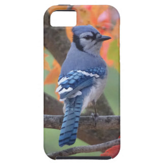 Geai bleu coque iPhone 5