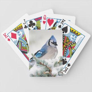 Geai bleu dans le cèdre d'atlas bleu jeux de cartes