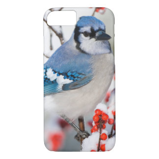 Geai bleu dans le Winterberry commun Coque iPhone 7
