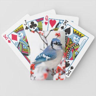 Geai bleu dans le Winterberry commun Jeu De Poker