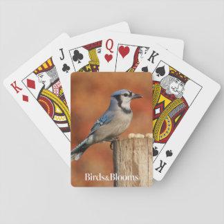 Geai bleu jeux de cartes