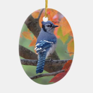Geai bleu ornement ovale en céramique