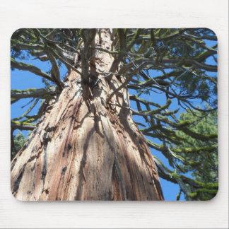 Géant de la Californie Tapis De Souris
