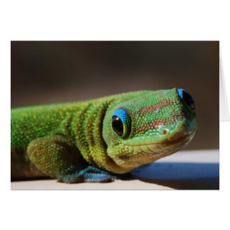 Gecko curieux carte de correspondance