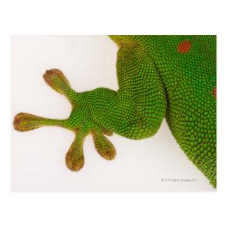 Gecko de jour du Madagascar (madagascariensis 2 de Carte Postale
