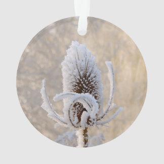 Gelée sur la nature pittoresque de photo d'hiver
