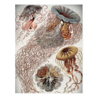 Gelées (méduses) dans des couleurs en pastel carte postale