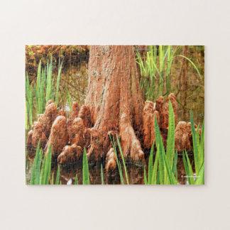 Genoux de Cypress chauve Puzzle