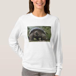Geochelone de tortues géantes de Galapagos T-shirt