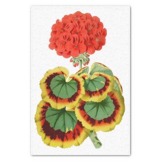 """Géranium rouge 10"""" botanique X 15"""" papier de soie"""