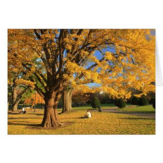 Ginkgo commun de feuillage d'automne de jardin cartes
