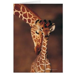 Girafe adulte avec le veau (camelopardalis de carte de vœux