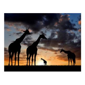 Girafe africaine carte postale