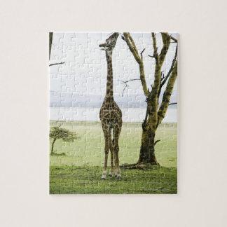 Girafe au Kenya, Afrique Puzzle