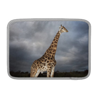 Girafe (camelopardalis de Giraffa) Poches Macbook