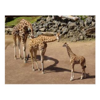 Girafe de bébé et famille de girafe carte postale