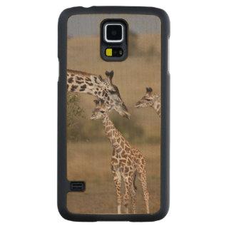 Girafe de Maasai (girafe Tippelskirchi) comme vu Coque Galaxy S5 En Érable