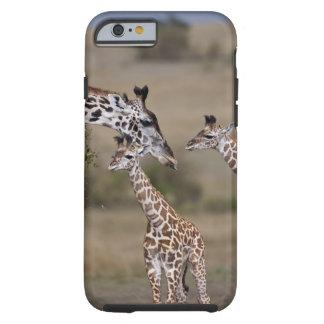 Girafe de Maasai (girafe Tippelskirchi) comme vu Coque Tough iPhone 6