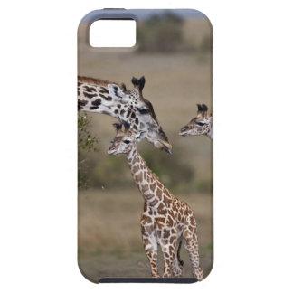 Girafe de Maasai (girafe Tippelskirchi) comme vu Coques iPhone 5