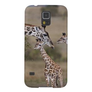 Girafe de Maasai (girafe Tippelskirchi) comme vu Coques Pour Galaxy S5