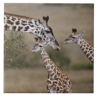 Girafe de Maasai (girafe Tippelskirchi) comme vu Grand Carreau Carré