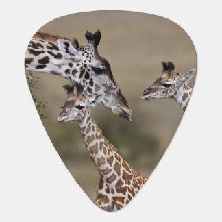 Girafe de Maasai (girafe Tippelskirchi) comme vu Onglet De Guitare