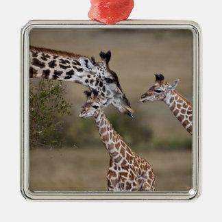 Girafe de Maasai (girafe Tippelskirchi) comme vu Ornement Carré Argenté