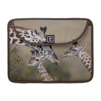 Girafe de Maasai (girafe Tippelskirchi) comme vu Poches Pour Macbook