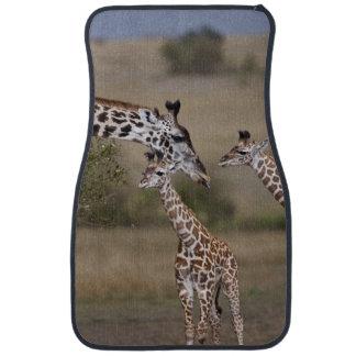 Girafe de Maasai (girafe Tippelskirchi) comme vu Tapis De Voiture