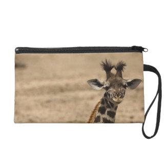 Girafe de masai, camelopardalis de Giraffa, se rep Dragonne