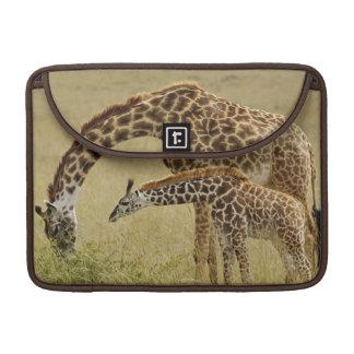 Girafe de masai de mère et de bébé, Giraffa Poches Pour Macbook