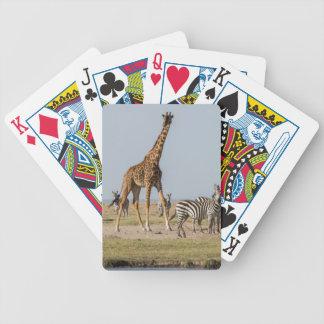 Girafe et zèbres par un point d'eau jeu de cartes