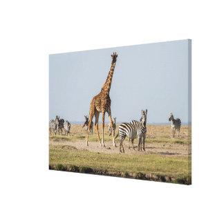 Girafe et zèbres par un point d'eau toile