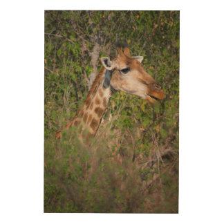 Girafe mangeant le feuille impression sur bois
