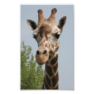 Girafe mignonne impressions photographiques