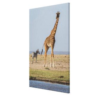 Girafe par un point d'eau toile