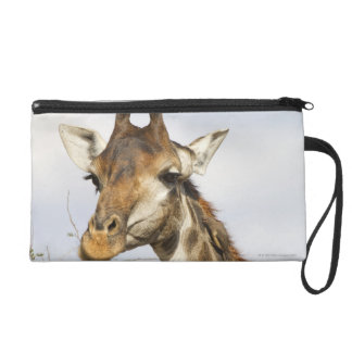 Girafe, parc national de Kruger, Afrique du Sud Pochette Avec Dragonne